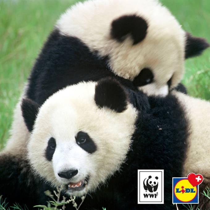 partnerschaft_wwf_pandas